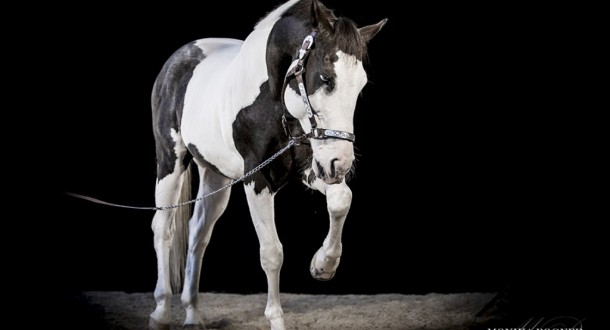 Unsere Pferde