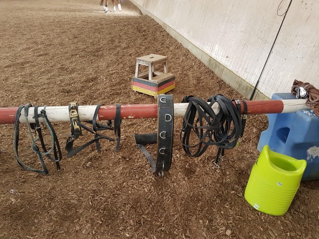 pferdehändler für voltigierpferde